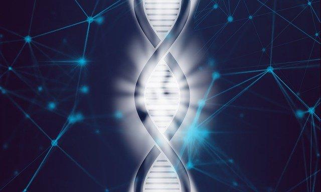Dna Life Biotechnology Evolution  - TheDigitalArtist / Pixabay